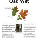 Oakwilt-North_Page_1