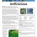 anthacnose-SS_Page_1