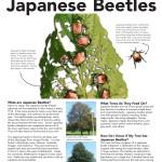 jap-beetle-SS_Page_1