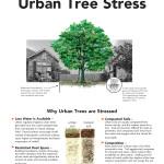 urban-tree-stress_Page_1
