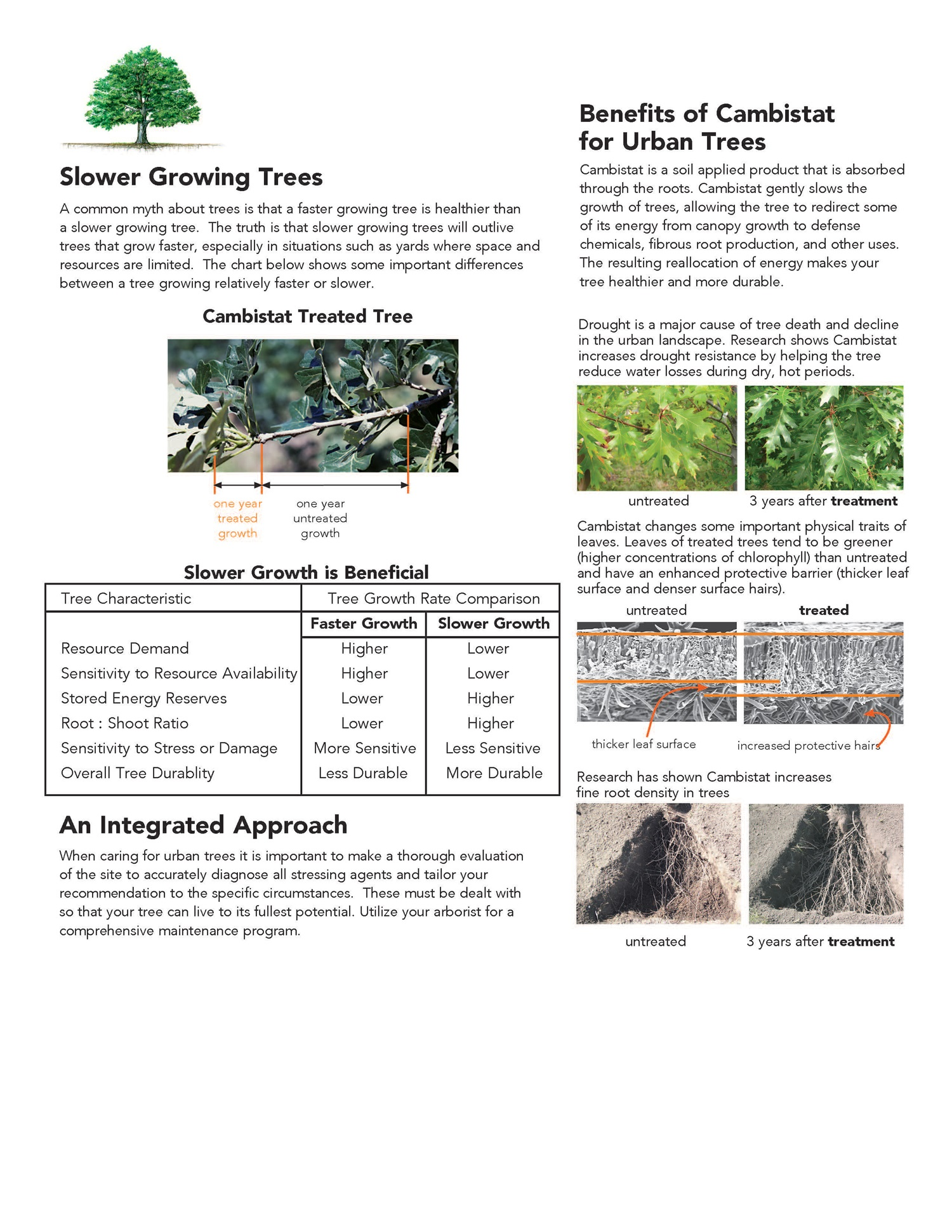 Tree Care   Mississippi Valley Tree Experts