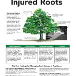 InjuredRoot_Page_1