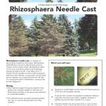 Rhizosphera_Page_1