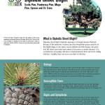 TreeGeek_DiplodiaShootBlight_Page_1