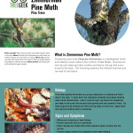 TreeGeek_ZimmermanPineMoth_Page_1