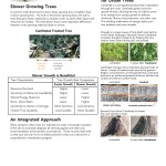 urban-tree-stress_Page_21